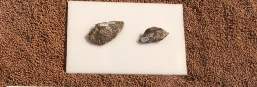 Small cone shaped bone flakes from the mastodon leg bone were caused by hammer stone blows.