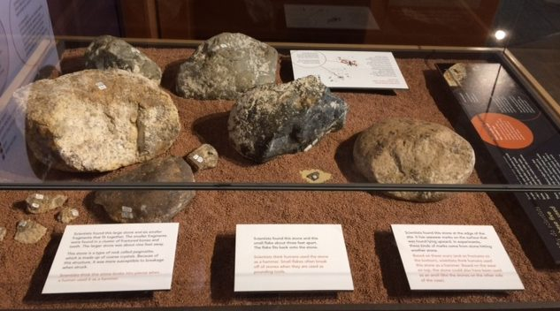 Cerutti hammer stones and anvils. Three Cerutti hammer stones (foreground) and two anvil stones (background). The stones have not been intentionally modified. Large hammer stone, far left, has six pieces broken lying in front of it as an unintended consequence of striking it against other bone/rock.