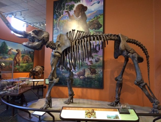 Mastodon skeleton on display.
